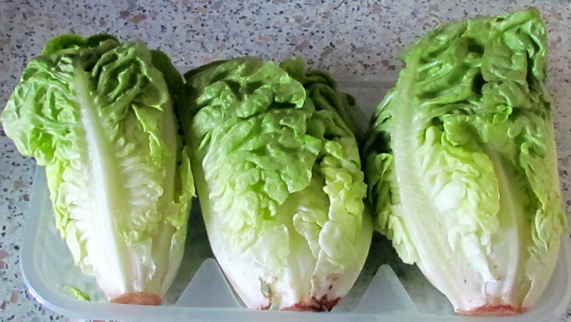 Sucrine - Variete de salade d hiver ...
